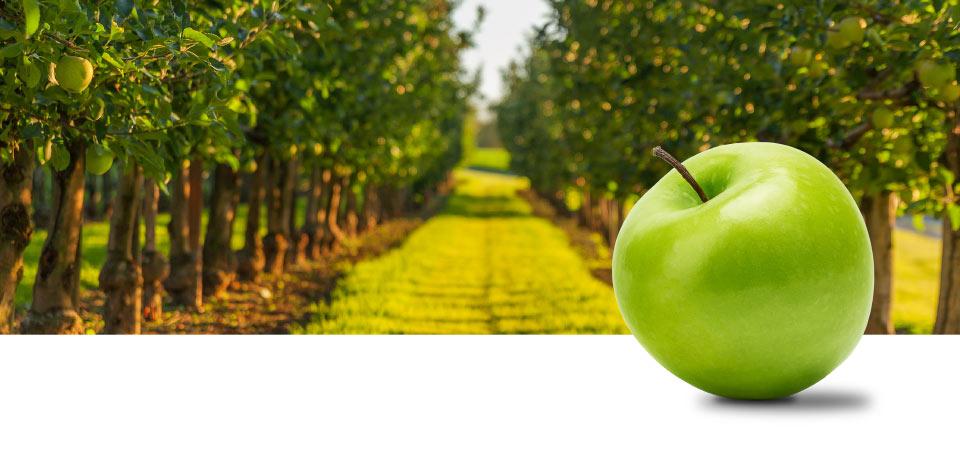 Appels van de hoogste kwaliteit