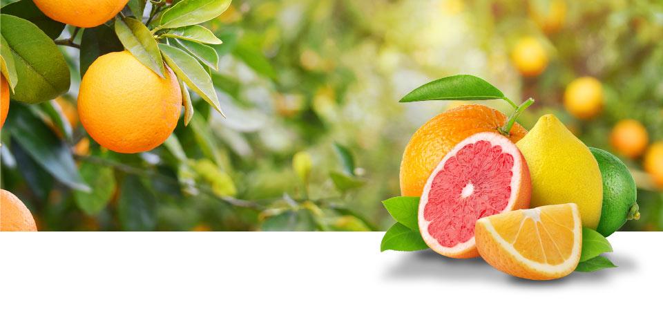 Citrusvruchten van de hoogste kwaliteit